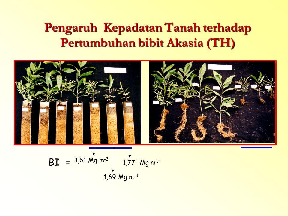 Pengaruh Kepadatan Tanah terhadap Pertumbuhan bibit Akasia (TH)