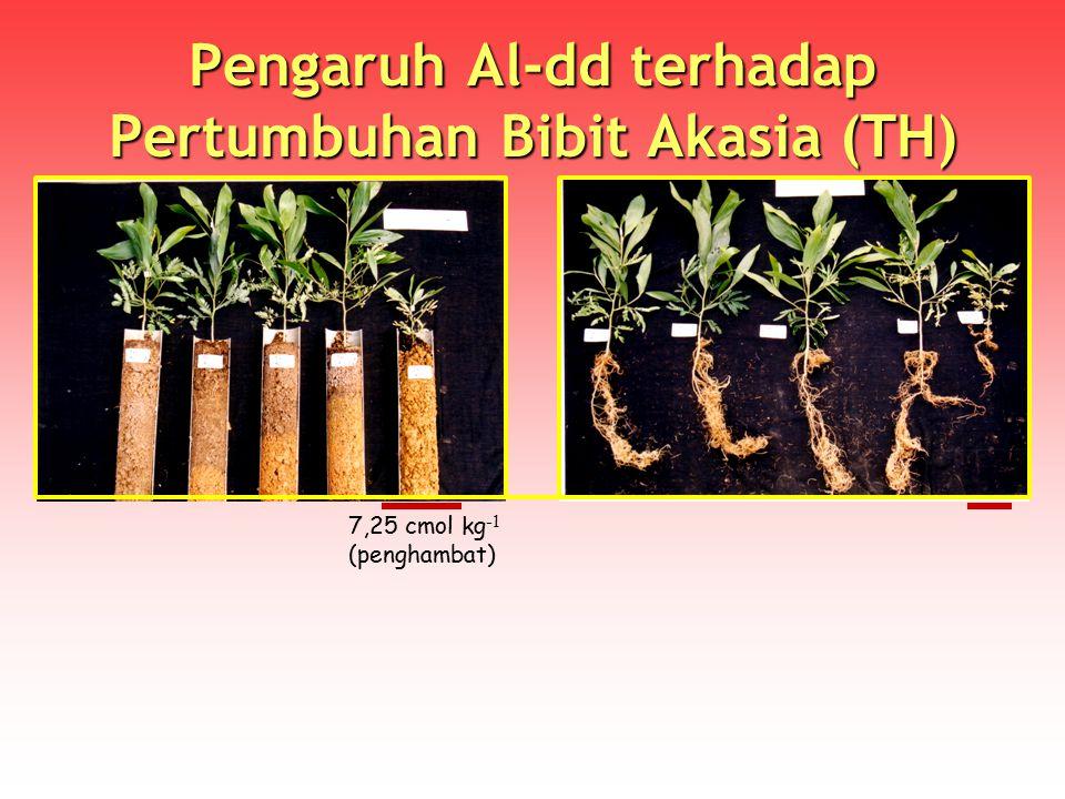Pengaruh Al-dd terhadap Pertumbuhan Bibit Akasia (TH)