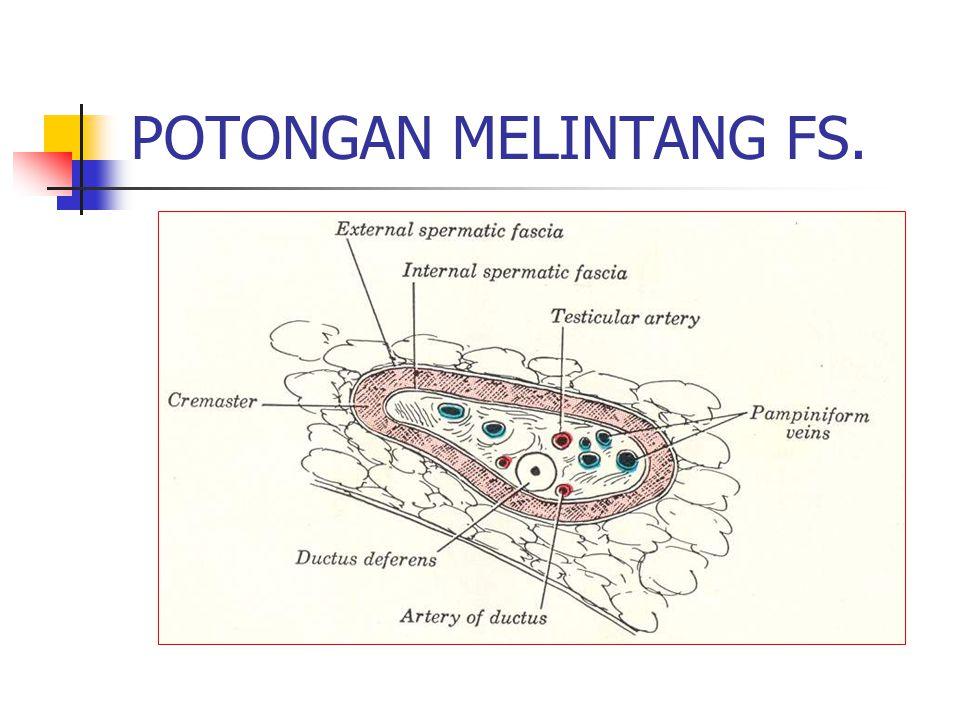POTONGAN MELINTANG FS.