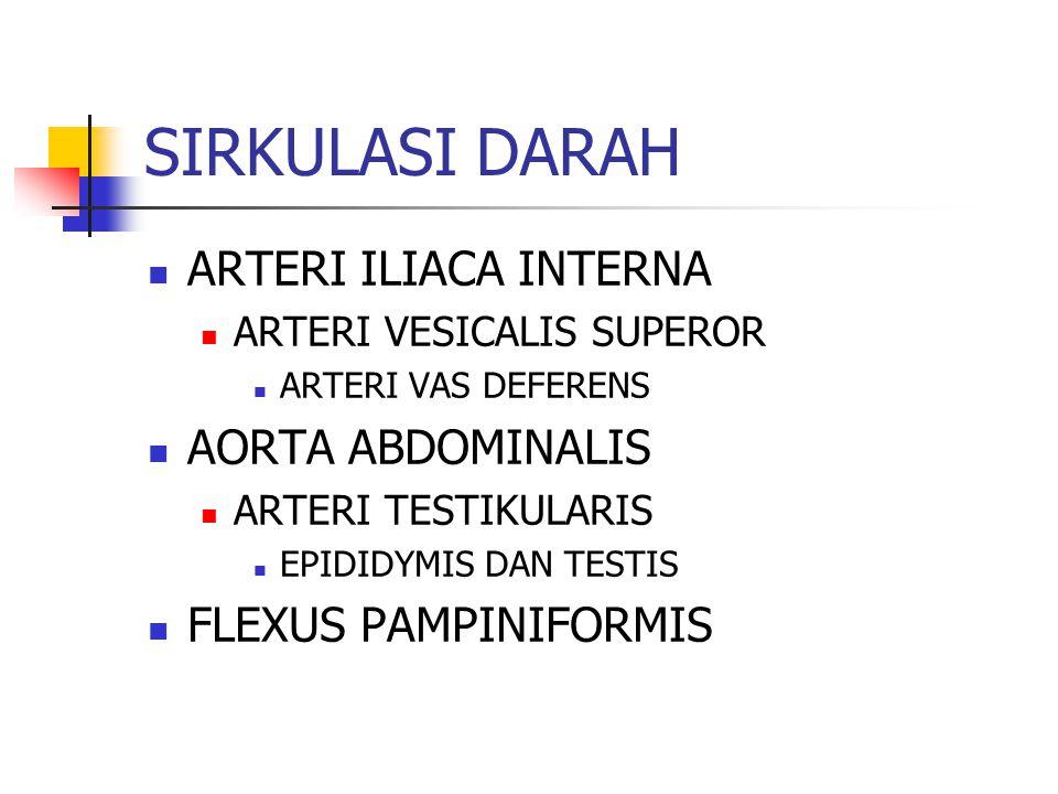 SIRKULASI DARAH ARTERI ILIACA INTERNA AORTA ABDOMINALIS