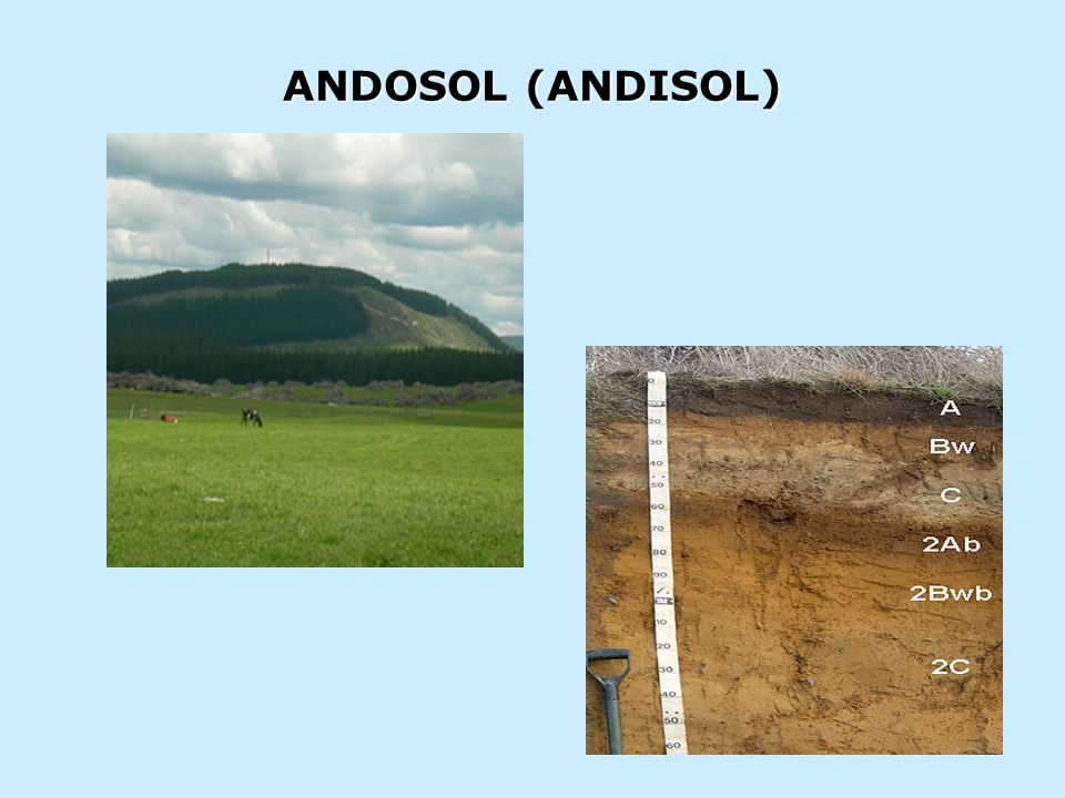 ANDOSOL (ANDISOL)