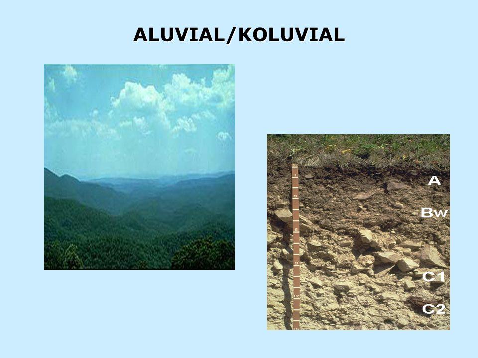 ALUVIAL/KOLUVIAL