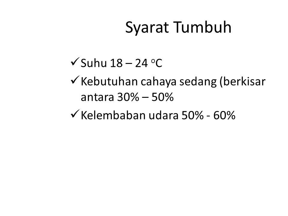Syarat Tumbuh Suhu 18 – 24 oC.