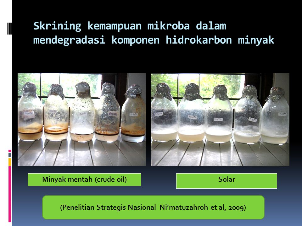 Skrining kemampuan mikroba dalam mendegradasi komponen hidrokarbon minyak