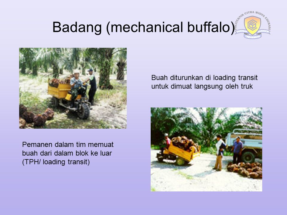 Badang (mechanical buffalo)