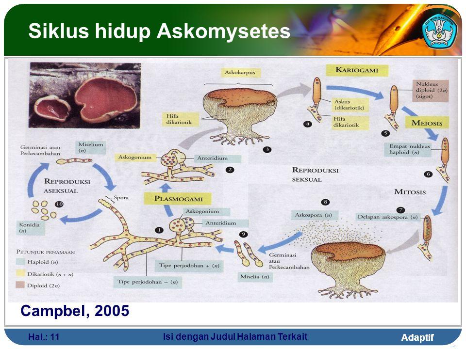 Siklus hidup Askomysetes