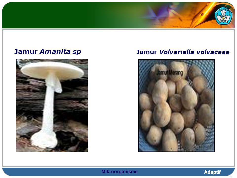 Jamur Amanita sp Jamur Volvariella volvaceae Mikroorganisme