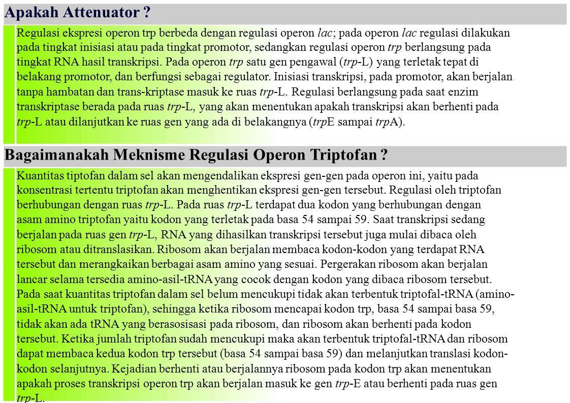 Bagaimanakah Meknisme Regulasi Operon Triptofan