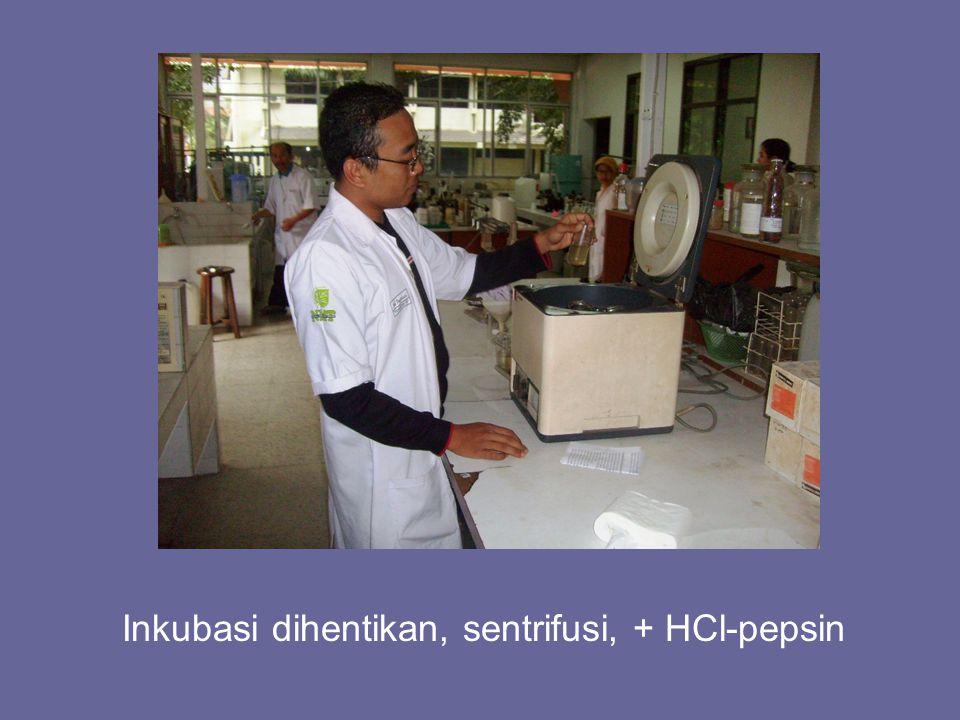 Inkubasi dihentikan, sentrifusi, + HCl-pepsin