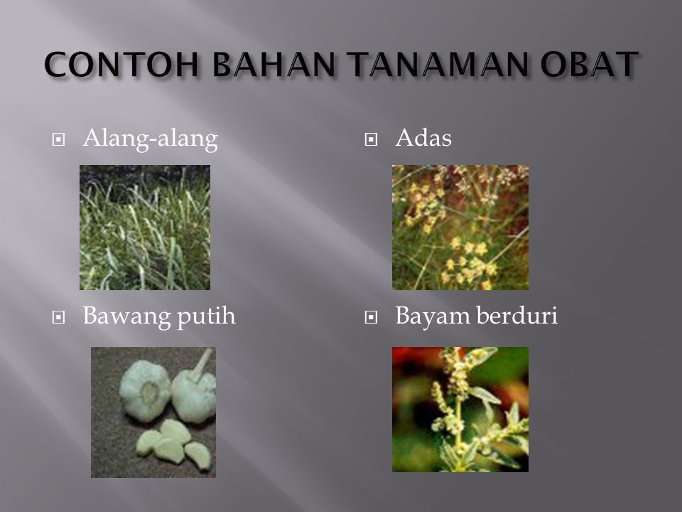 CONTOH BAHAN TANAMAN OBAT