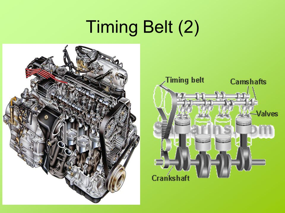 Timing Belt (2)