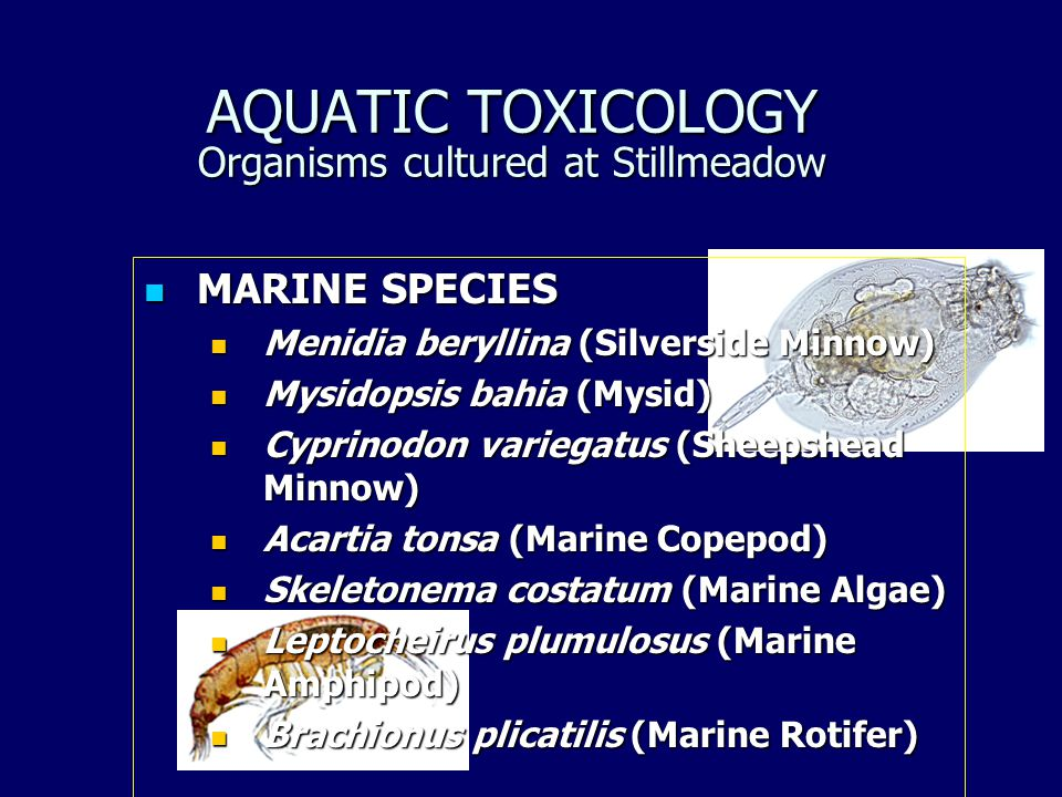 AQUATIC TOXICOLOGY Organisms cultured at Stillmeadow