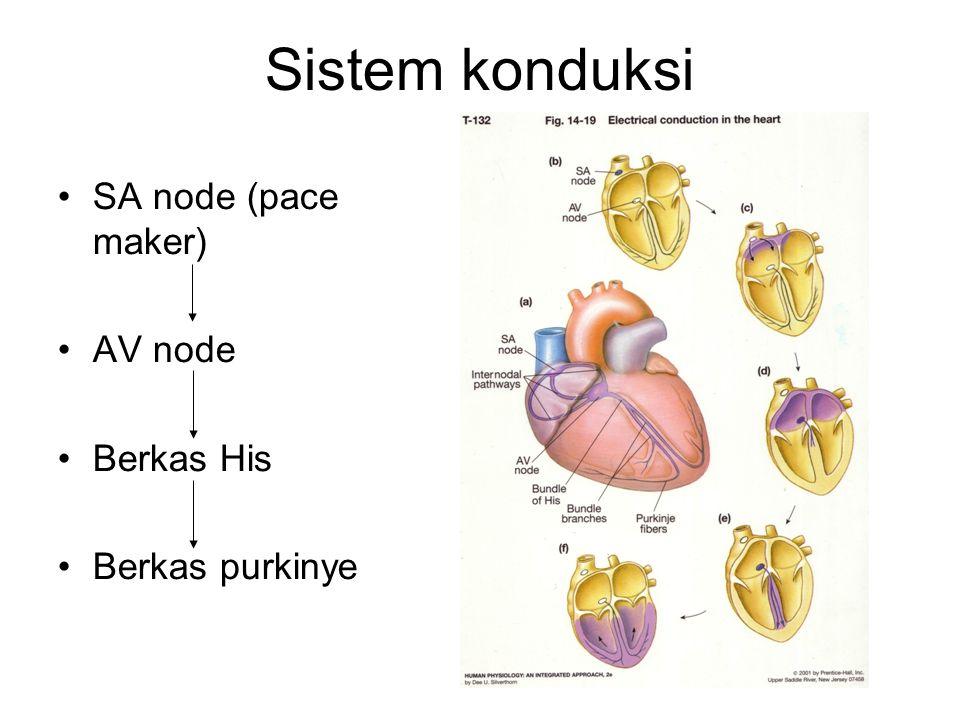 Sistem konduksi SA node (pace maker) AV node Berkas His