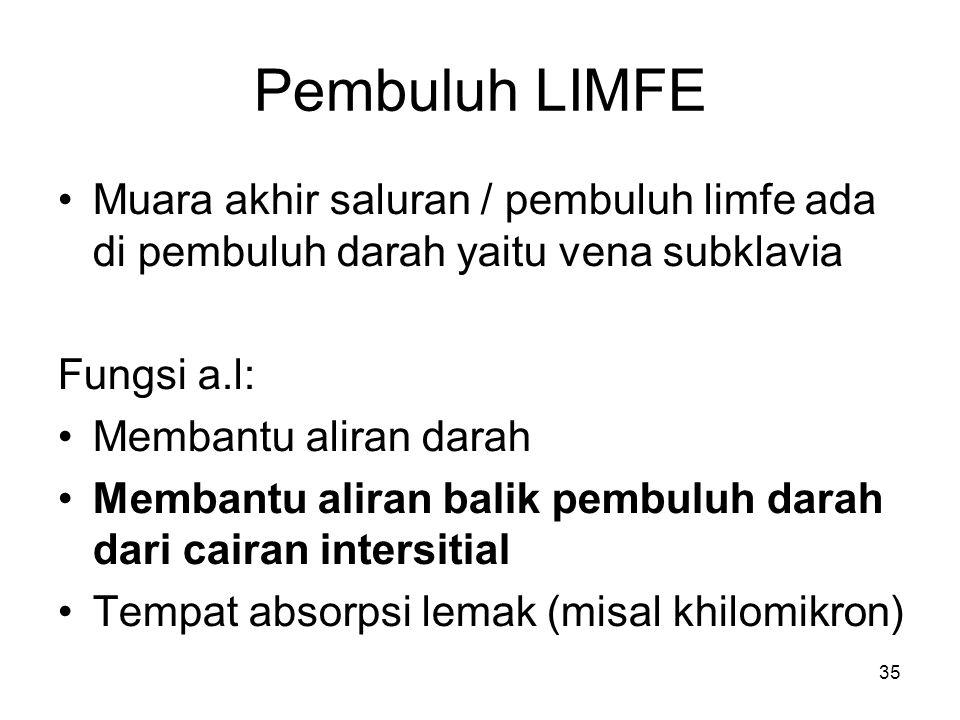 Pembuluh LIMFE Muara akhir saluran / pembuluh limfe ada di pembuluh darah yaitu vena subklavia. Fungsi a.l: