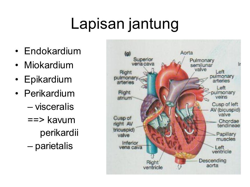 Lapisan jantung Endokardium Miokardium Epikardium Perikardium