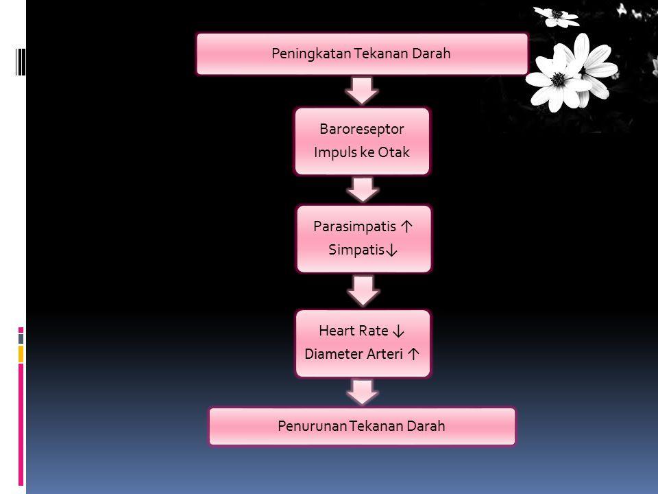 Peningkatan Tekanan Darah Impuls ke Otak Baroreseptor Parasimpatis ↑