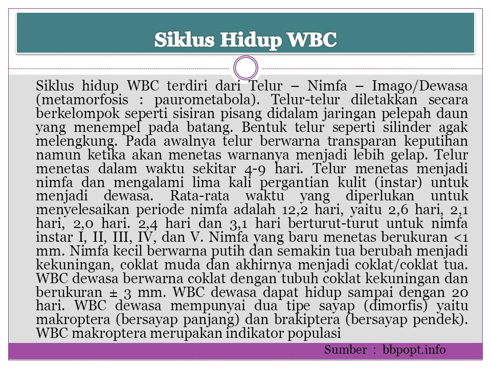 Siklus Hidup WBC