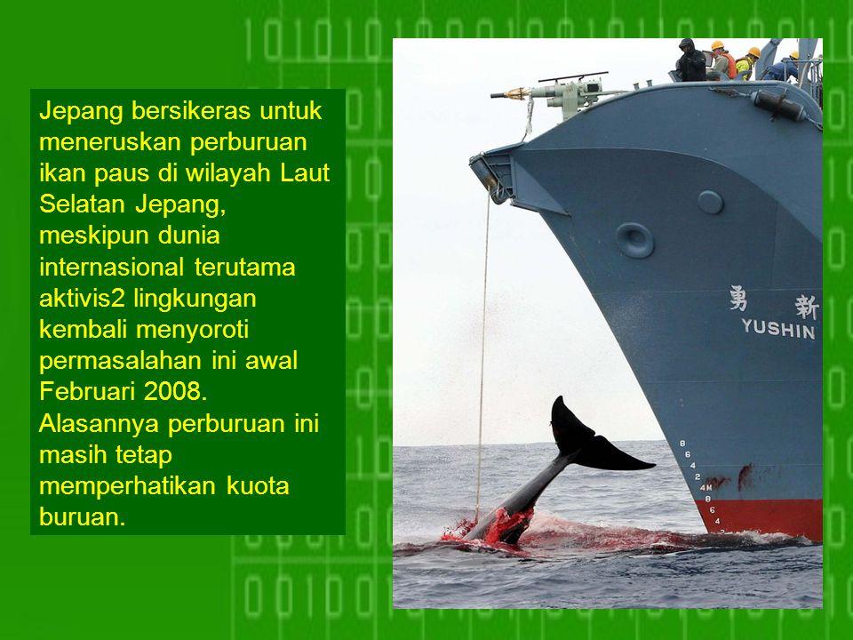 Jepang bersikeras untuk meneruskan perburuan ikan paus di wilayah Laut Selatan Jepang, meskipun dunia internasional terutama aktivis2 lingkungan kembali menyoroti permasalahan ini awal Februari 2008.