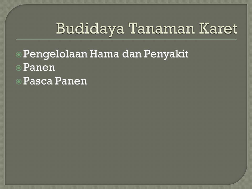 Budidaya Tanaman Karet