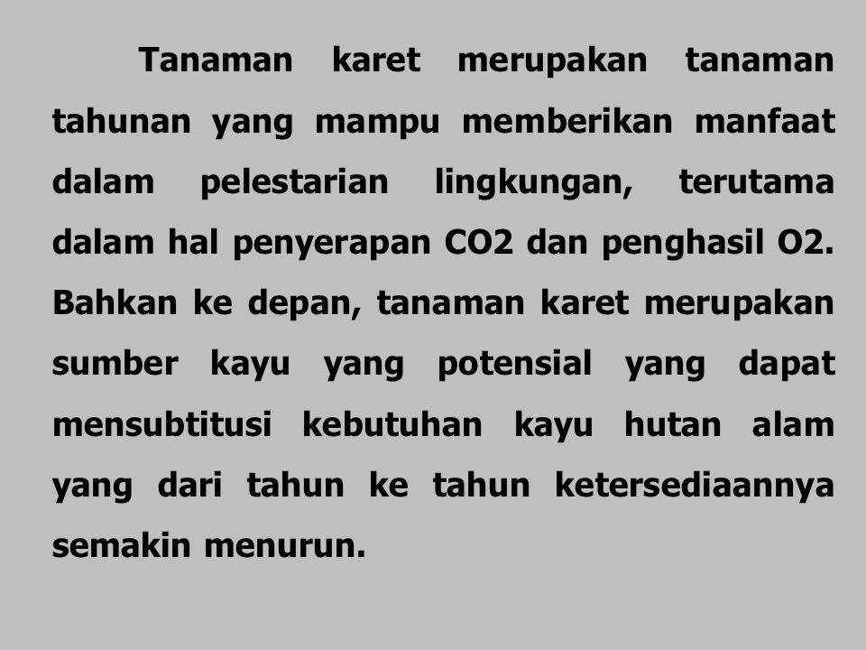Tanaman karet merupakan tanaman tahunan yang mampu memberikan manfaat dalam pelestarian lingkungan, terutama dalam hal penyerapan CO2 dan penghasil O2.