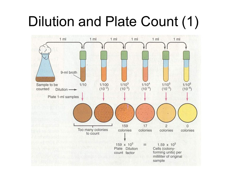 Dilution and Plate Count (1)
