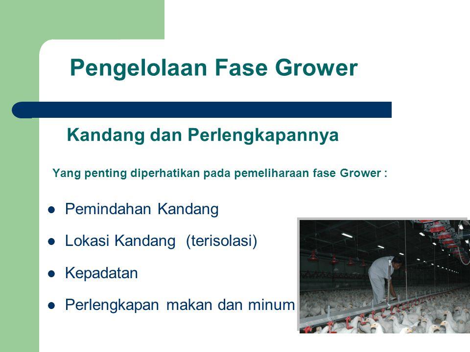 Pengelolaan Fase Grower