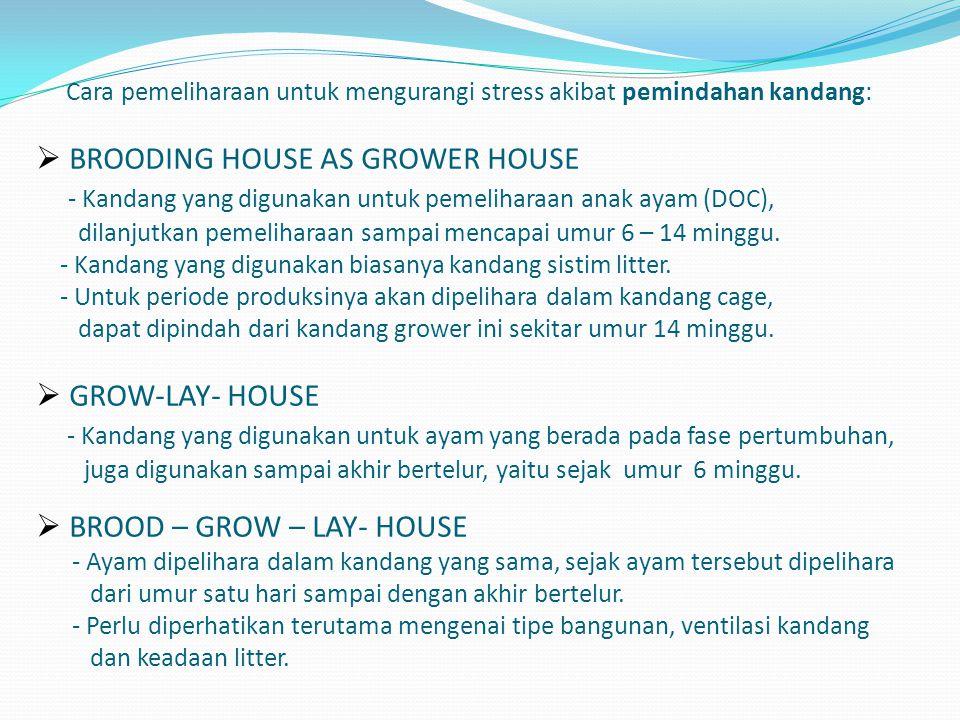 Cara pemeliharaan untuk mengurangi stress akibat pemindahan kandang:  BROODING HOUSE AS GROWER HOUSE - Kandang yang digunakan untuk pemeliharaan anak ayam (DOC), dilanjutkan pemeliharaan sampai mencapai umur 6 – 14 minggu.