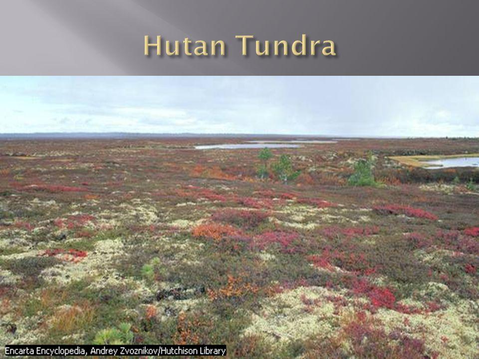 Hutan Tundra