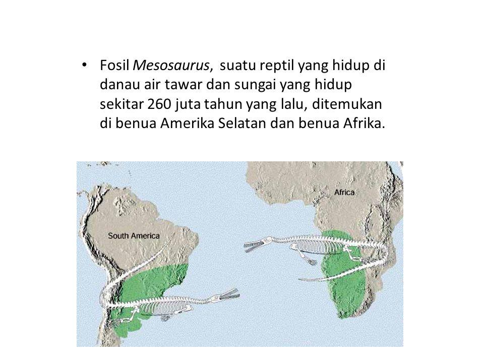 Fosil Mesosaurus, suatu reptil yang hidup di danau air tawar dan sungai yang hidup sekitar 260 juta tahun yang lalu, ditemukan di benua Amerika Selatan dan benua Afrika.