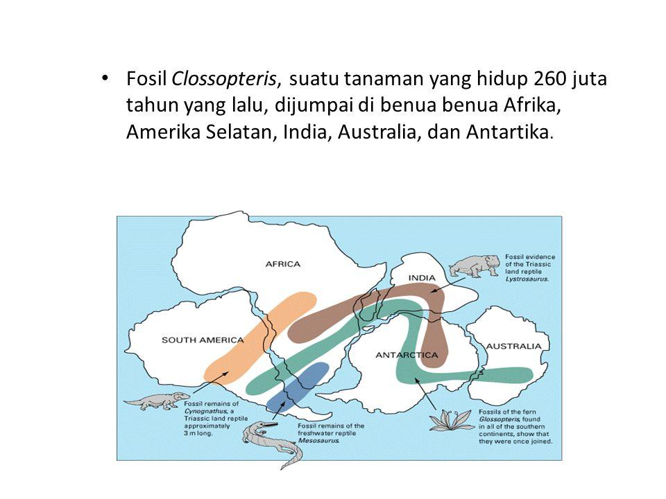 Fosil Clossopteris, suatu tanaman yang hidup 260 juta tahun yang lalu, dijumpai di benua benua Afrika, Amerika Selatan, India, Australia, dan Antartika.