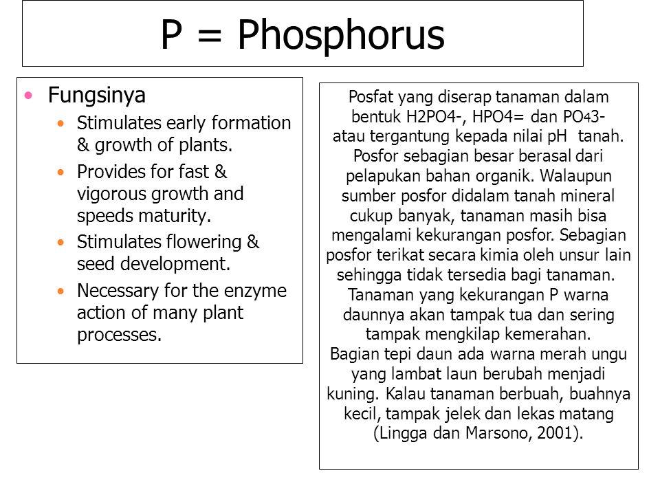 P = Phosphorus Fungsinya