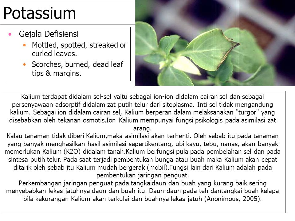 Potassium Gejala Defisiensi
