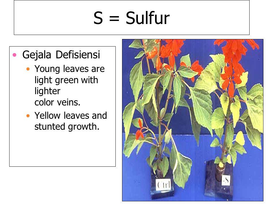 S = Sulfur Gejala Defisiensi