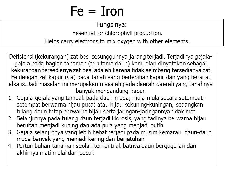 Fe = Iron Fungsinya: Essential for chlorophyll production.