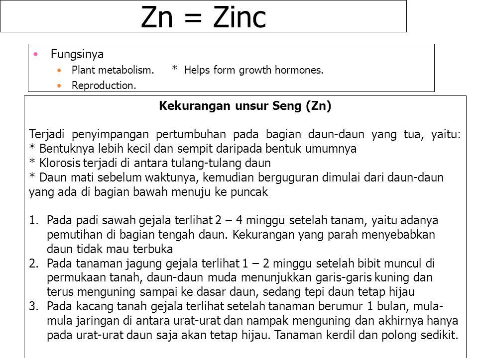 Kekurangan unsur Seng (Zn)