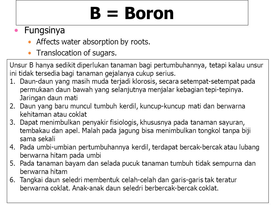 B = Boron Fungsinya Affects water absorption by roots.