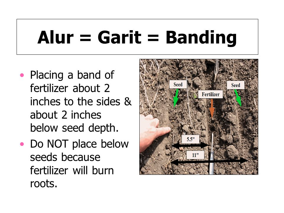 Alur = Garit = Banding Placing a band of fertilizer about 2 inches to the sides & about 2 inches below seed depth.
