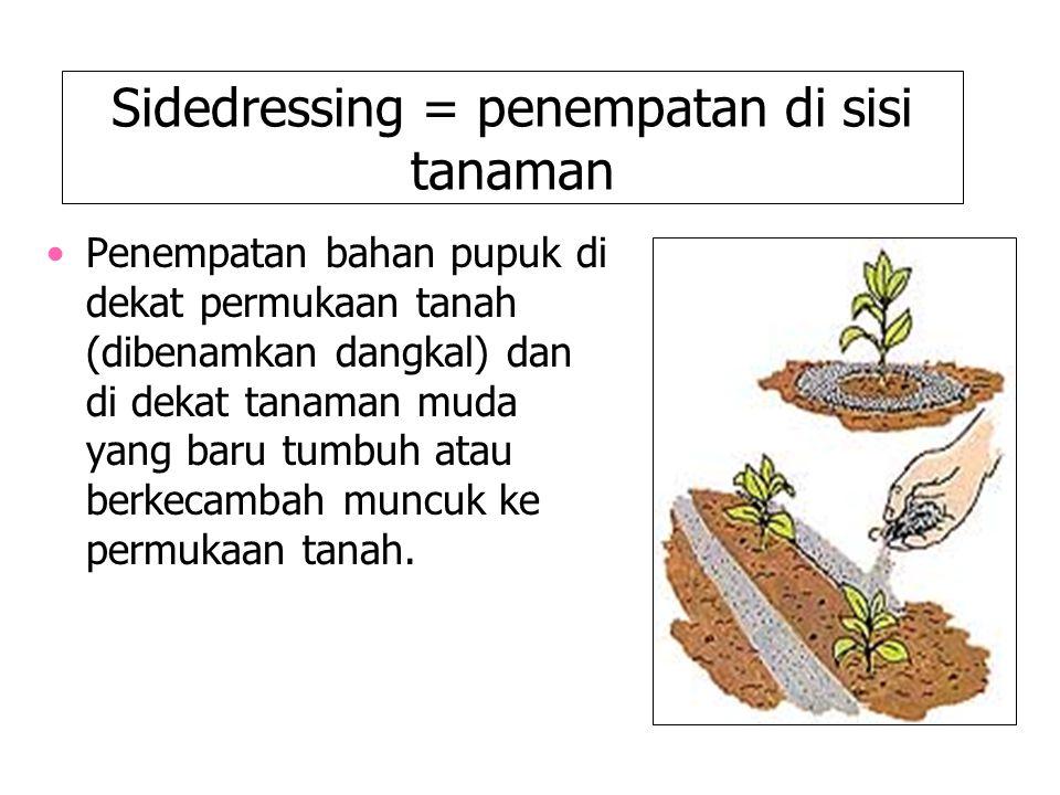 Sidedressing = penempatan di sisi tanaman