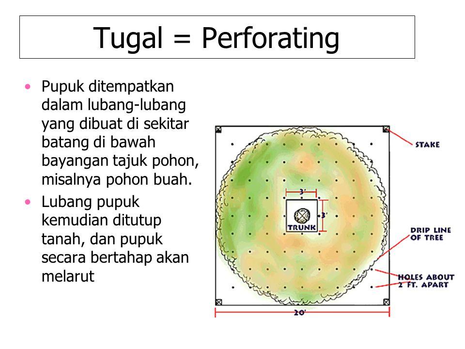 Tugal = Perforating Pupuk ditempatkan dalam lubang-lubang yang dibuat di sekitar batang di bawah bayangan tajuk pohon, misalnya pohon buah.