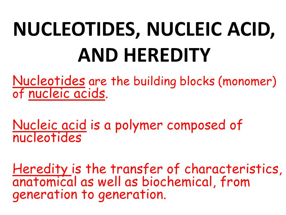 NUCLEOTIDES, NUCLEIC ACID, AND HEREDITY