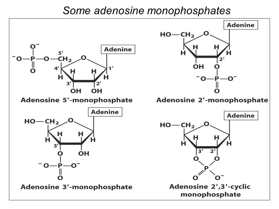 Some adenosine monophosphates