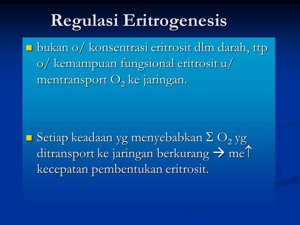 Regulasi Eritrogenesis
