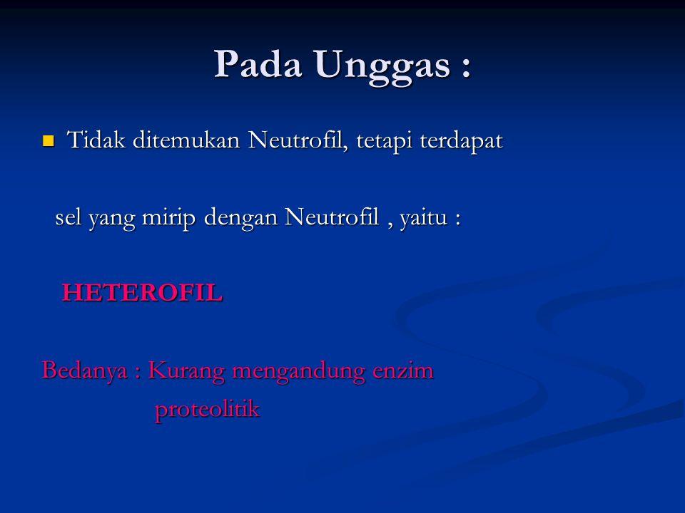 Pada Unggas : Tidak ditemukan Neutrofil, tetapi terdapat