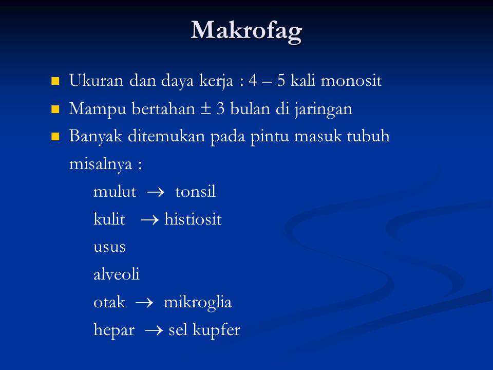 Makrofag Ukuran dan daya kerja : 4 – 5 kali monosit