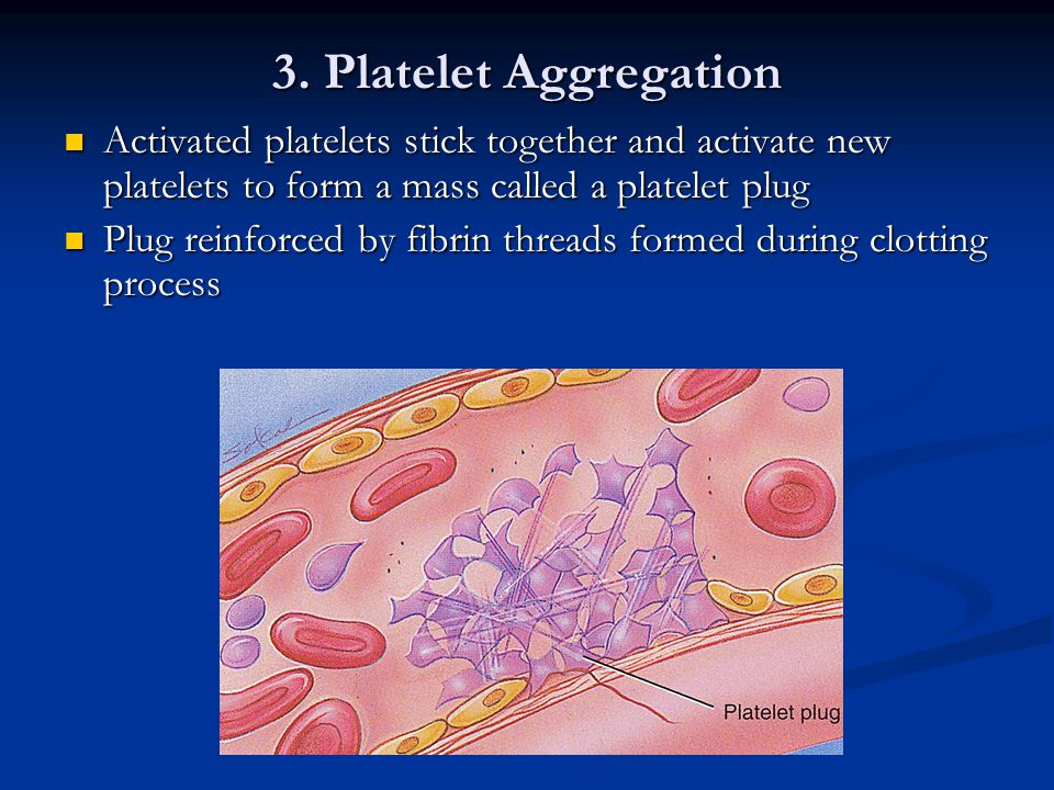 3. Platelet Aggregation Activated platelets stick together and activate new platelets to form a mass called a platelet plug.