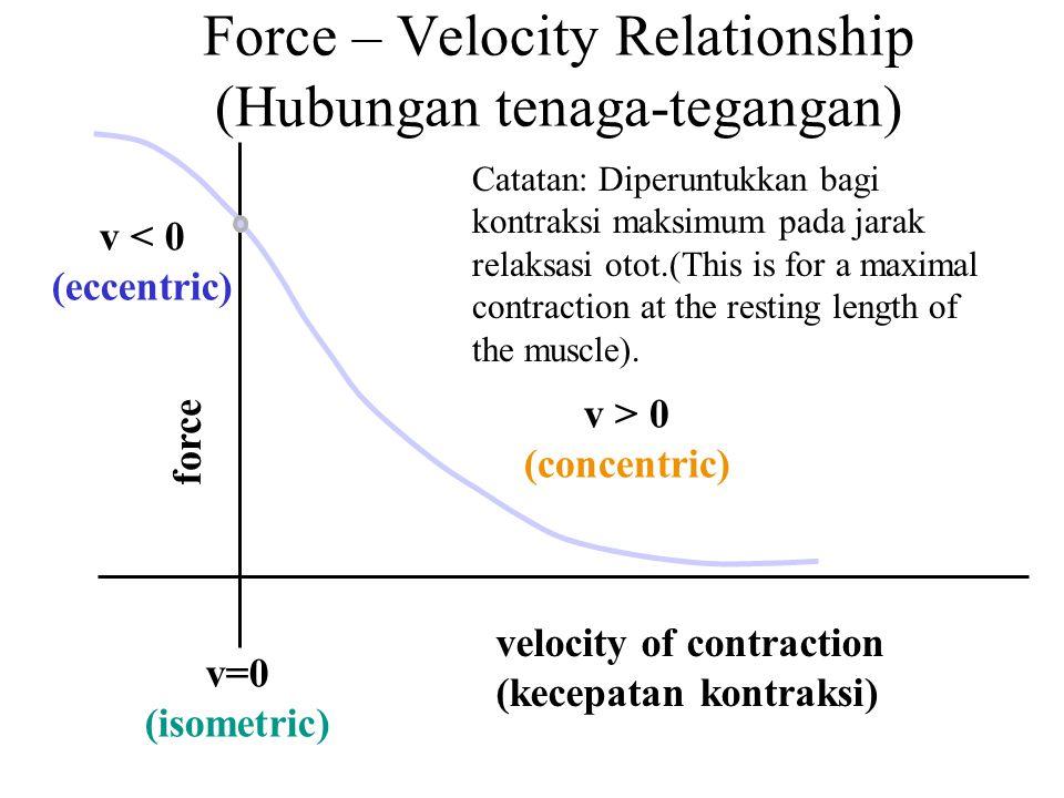 Force – Velocity Relationship (Hubungan tenaga-tegangan)