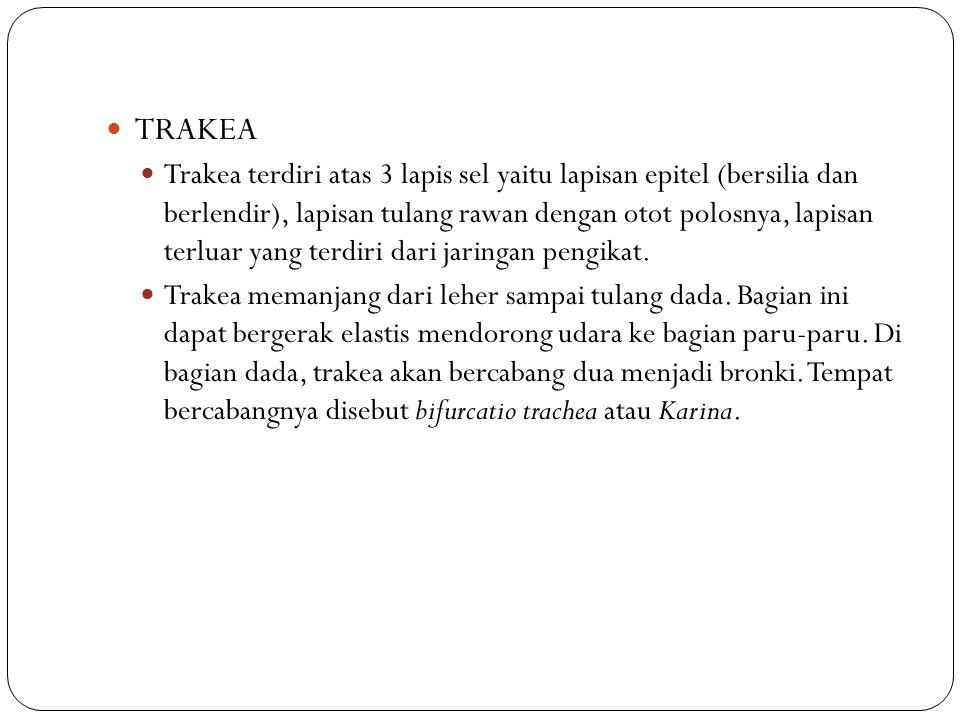 TRAKEA