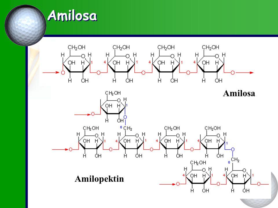 Amilosa Amilosa Amilopektin