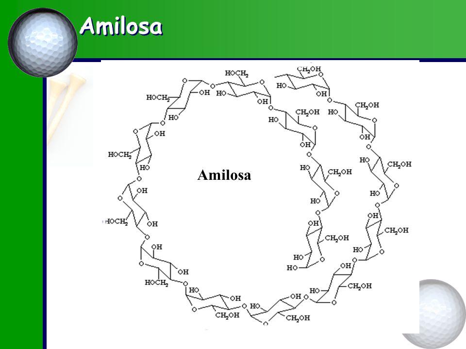 Amilosa Amilosa