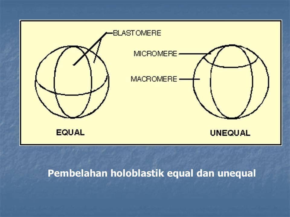 Pembelahan holoblastik equal dan unequal